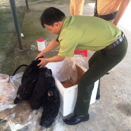 Bat qua tang xe khach van chuyen 4 ca the vooc den ma trang - Anh 2