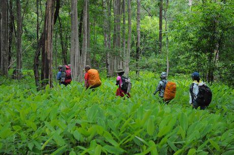 Cung duong trekking dep nhat Viet Nam 'hop hon' phuot thu - Anh 11
