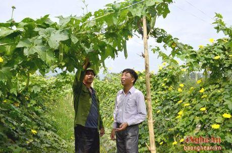 Don dien doi thua - chu truong hop long dan - Anh 2