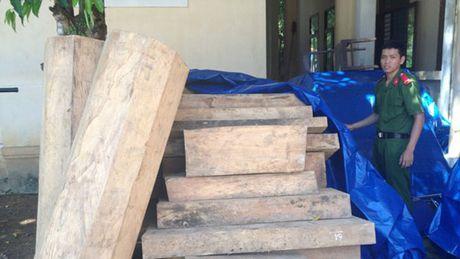 Quang Nam: Mat 125 ha rung trong 9 thang - Anh 1