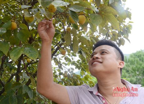 Mua hong chin tren Chua Dai Tue - Anh 10
