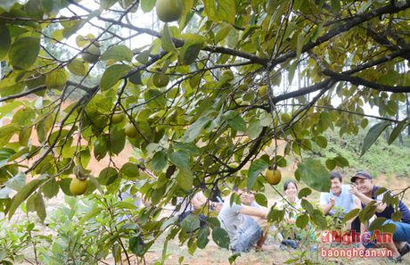 Mua hong chin tren Chua Dai Tue - Anh 1