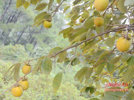 Mua hong chin tren Chua Dai Tue - Anh 4