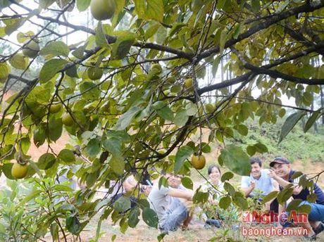 Mua hong chin tren Chua Dai Tue - Anh 6