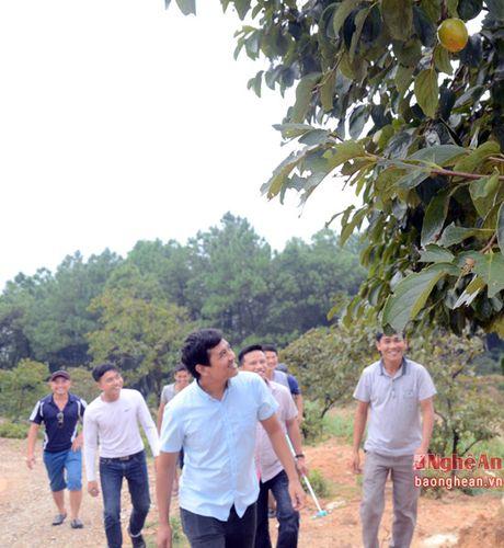 Mua hong chin tren Chua Dai Tue - Anh 8