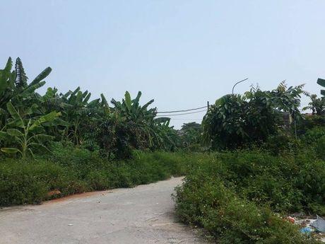 Du an khu nha o phuong Nong Trang (Phu Tho): Chu dau tu 'mang con bo cho'! - Anh 3