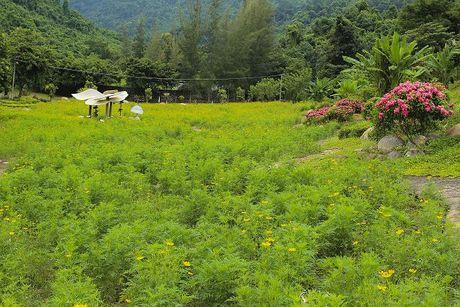 Den Nha Trang tham quan vuon hoa canh buom Yang Bay - Anh 1