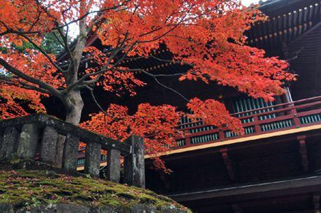 Ve dep trang le cua quan the den chua Nikko Toshogu - Anh 1