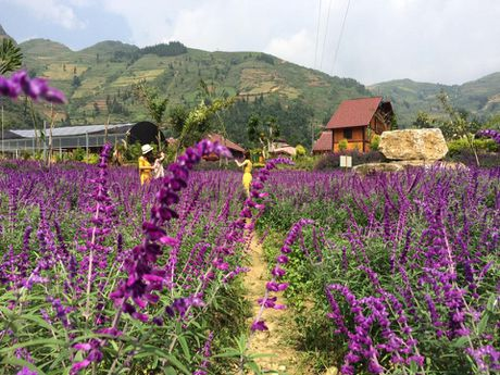 Ngan ngo truoc mua hoa oai huong o thung lung Bac Ha - Anh 3