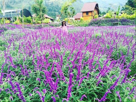 Ngan ngo truoc mua hoa oai huong o thung lung Bac Ha - Anh 7