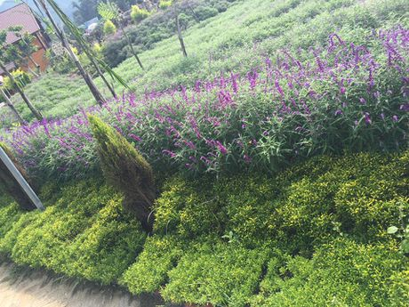 Ngan ngo truoc mua hoa oai huong o thung lung Bac Ha - Anh 9