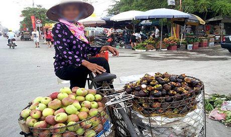 Can trong voi tao Trung Quoc doi lot tao Quan Ba - Ha Giang - Anh 1