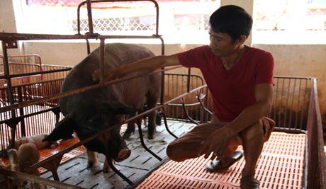 Nong dan Ninh Binh kiem tien ty moi nam nho nuoi dac san - Anh 2
