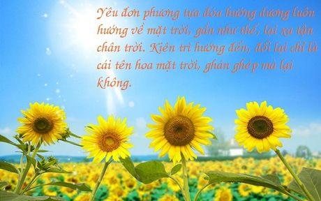 Dau don den vay nhung van khong the tu bo, chi co ai tung yeu don phuong moi cam nhan duoc - Anh 6
