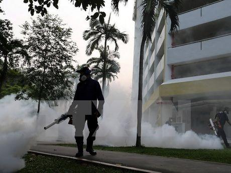 Canh bao nguy co virus Zika lan rong o chau A-Thai Binh Duong - Anh 1