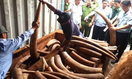Ket qua giam dinh hon 2 tan nga voi bi bat khi nhap Cang Sai Gon - Anh 1