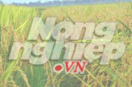 Da Nang len tieng viec Quang Nam cho xay dung nha may thep o mien nui - Anh 1