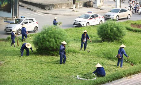 Hinh anh: Cong nhan Ha Noi cat co tro lai sau 3 thang tam dung - Anh 1