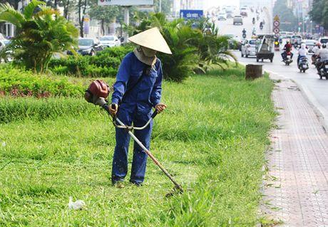 Hinh anh: Cong nhan Ha Noi cat co tro lai sau 3 thang tam dung - Anh 2