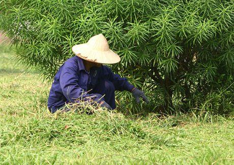 Hinh anh: Cong nhan Ha Noi cat co tro lai sau 3 thang tam dung - Anh 4