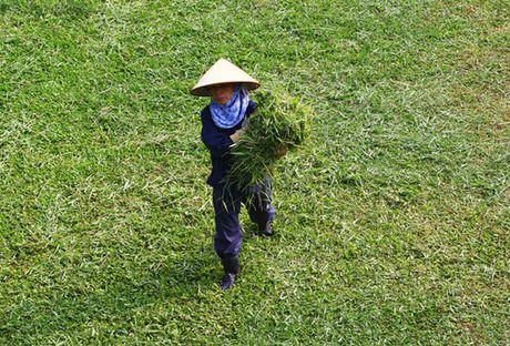 Hinh anh: Cong nhan Ha Noi cat co tro lai sau 3 thang tam dung - Anh 5