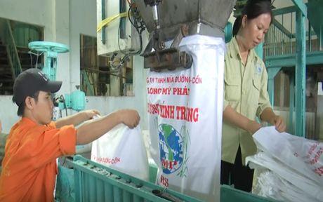 Hau Giang: Nha may duong ngung hoat dong vi thieu nguyen lieu - Anh 3