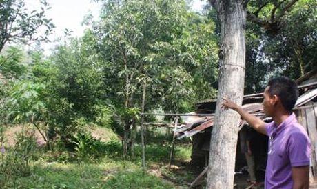 Nha may thep ngan ty: Quang Nam tra loi Da Nang - Anh 1