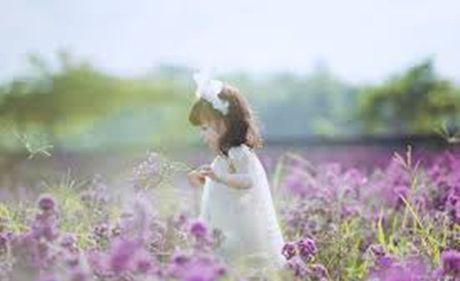 Can canh trai cuu va thao nguyen hoa tuyet dep giua long HN - Anh 1