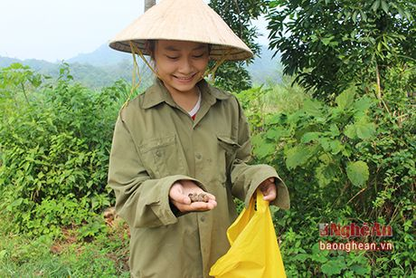 Mua luom hat de o mien tay Nghe An - Anh 7