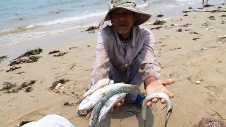 Da chuyen 3.000 ty dong ho tro ngu dan vu Formosa - Anh 1