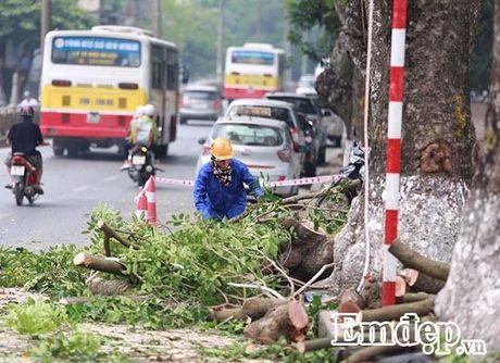 Can canh hang xa cu tren duong Kim Ma bi cat xe de di doi - Anh 10