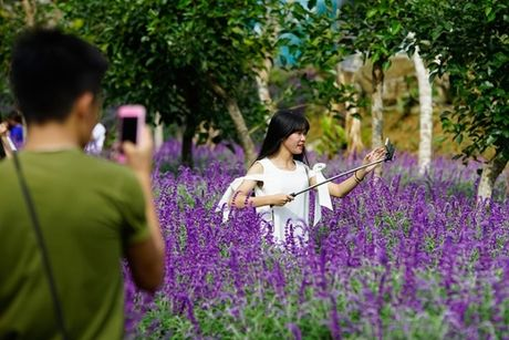 Gioi tre do xo den chup hinh o canh dong hoa oai huong Lao Cai - Anh 4