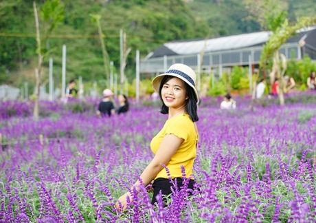 Gioi tre do xo den chup hinh o canh dong hoa oai huong Lao Cai - Anh 5
