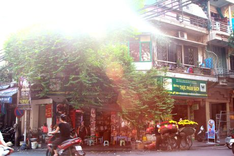 Mua thu pho co Ha Noi dep den nao long - Anh 5