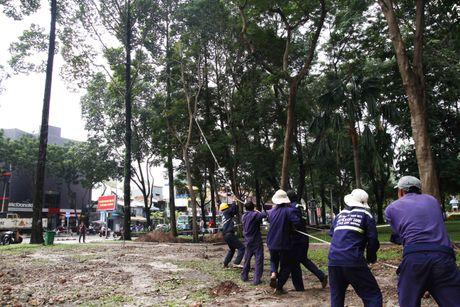 Don ha, doi 75 cay xanh o Sai Gon de xay metro Ben Thanh - Suoi Tien - Anh 1