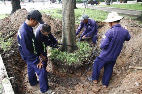 Don ha, doi 75 cay xanh o Sai Gon de xay metro Ben Thanh - Suoi Tien - Anh 2