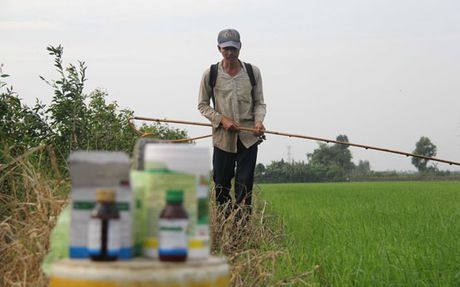 Gao Viet xuat khau sang My bi tra lai: Mat uy tin nhieu hon mat tien - Anh 2