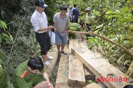 Khai thac go trai phep tai rung dau nguon Tuong Duong - Anh 2
