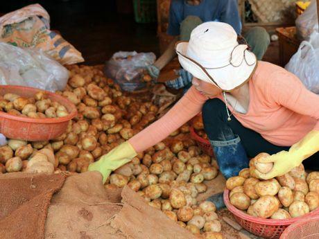 Cach giup ban phan biet rau cu Trung Quoc va Viet Nam de dang - Anh 1