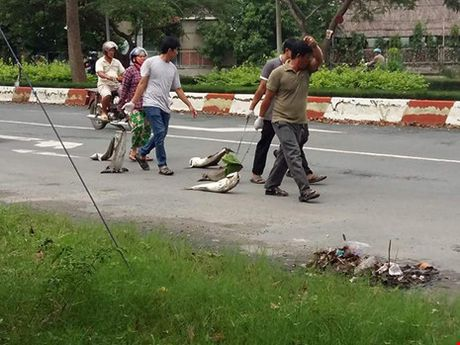 Dan mang ca chet ra chan QL51: Tinh chi dao lam ro nguyen nhan - Anh 3