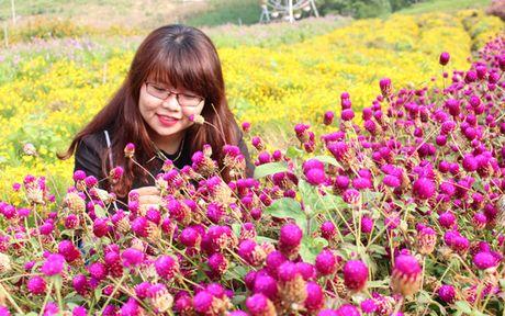 Ru nhau len thien duong co that o Moc Chau - Anh 10