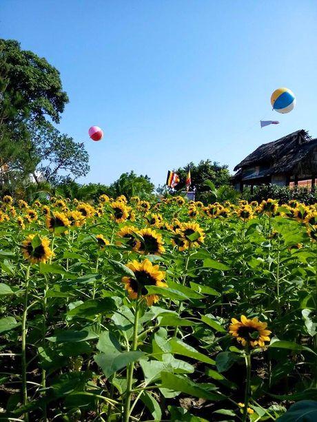 Gioi tre thich thu voi diem ngam hoa huong duong gan Ha Noi - Anh 6
