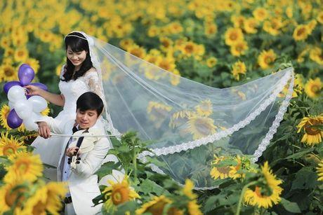 Gioi tre thich thu voi diem ngam hoa huong duong gan Ha Noi - Anh 8