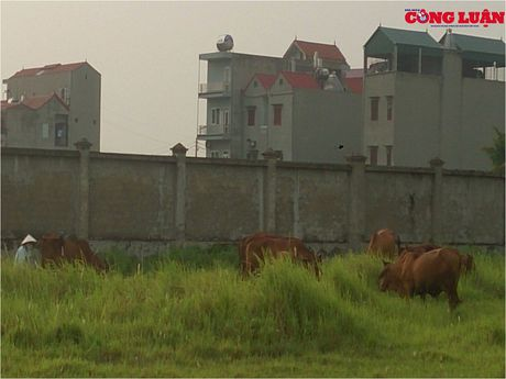 Bac Ninh: Hoang phi du an tram ty cua Cong ty CP Khai Son - Anh 3