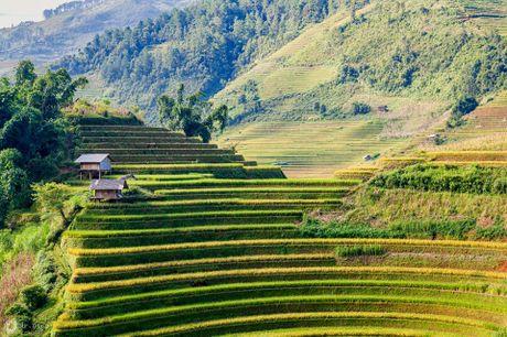 Cuoi thu, len dinh deo Khau Pha ngam mua vang tren nuong - Anh 2
