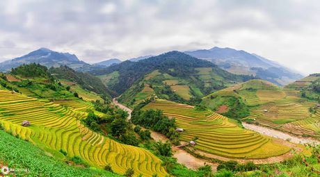 Cuoi thu, len dinh deo Khau Pha ngam mua vang tren nuong - Anh 3