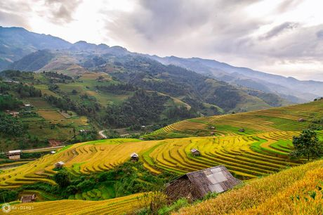 Cuoi thu, len dinh deo Khau Pha ngam mua vang tren nuong - Anh 5