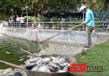 Da Nang len phuong an nao vet ho Cong vien 29/3 - Anh 1
