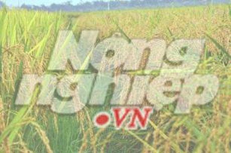 Tuyen Viet Nam tham lang tre SOS - Anh 1