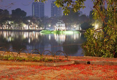 Hoa loc vung ben Ho Guom - Anh 1